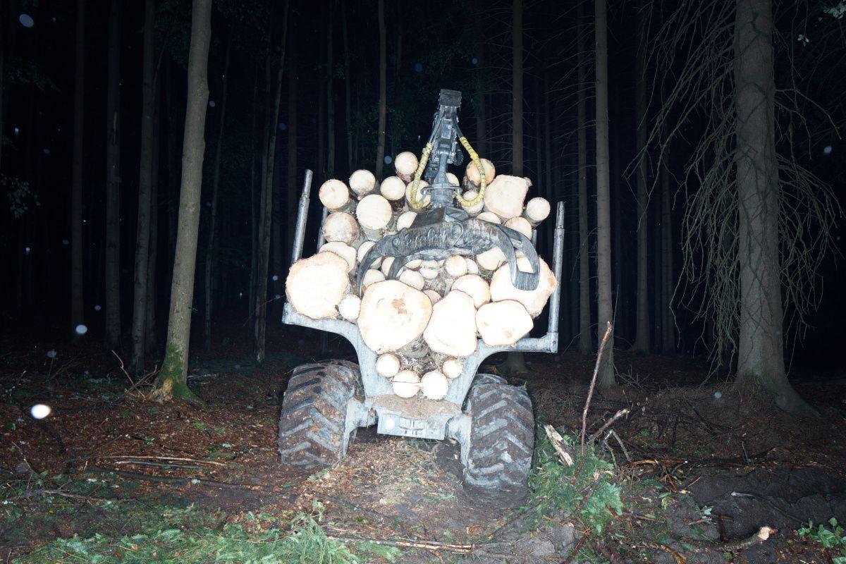 Jak se dělá les